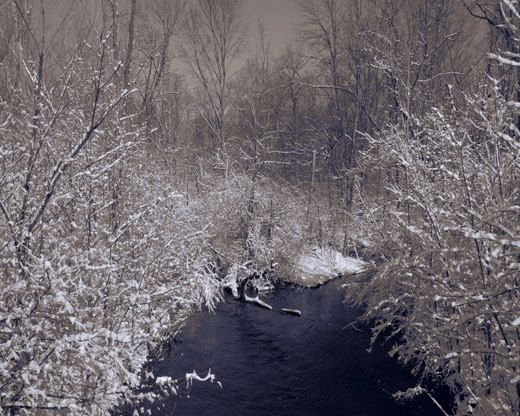 Snow art photography Creek  White Trees Sepia by MorrisClassics, $27.50