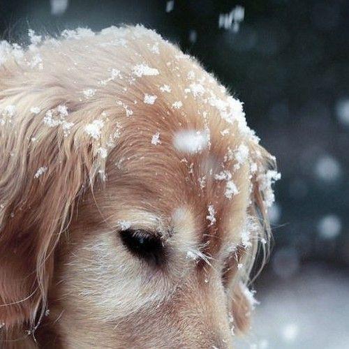 Immagine di dog, snow, and winter