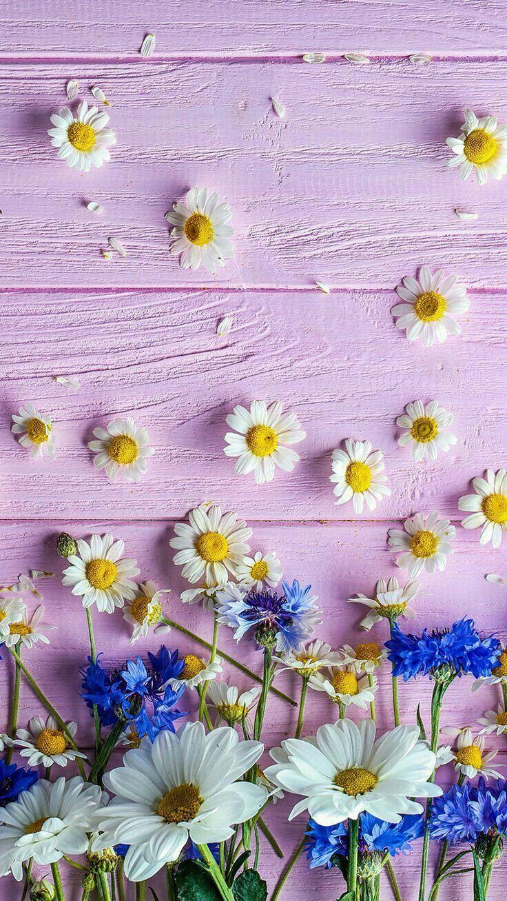 Iphonepics Nature Iphone Wallpaper Flower Phone Wallpaper Nature Wallpaper