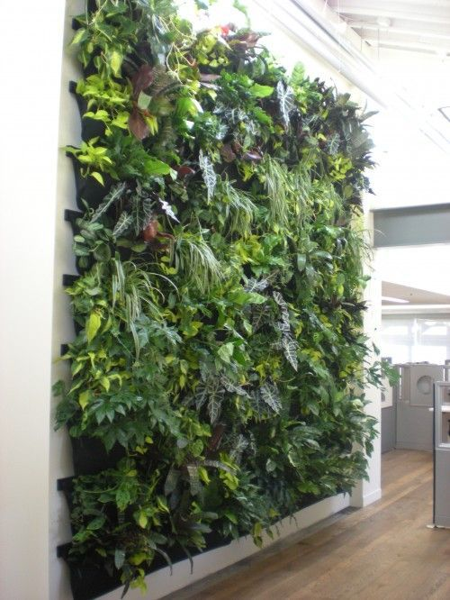 "Inside ""green wall"" vertical garden with variety of plants. A living wall."