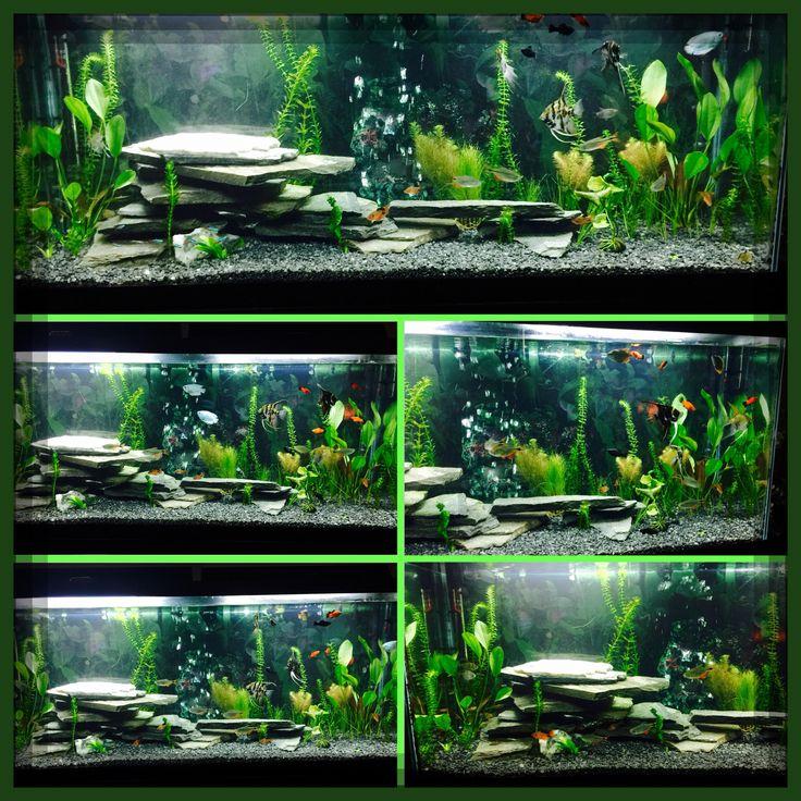 1000 ideas about fish tank terrarium on pinterest for Fish tank background ideas