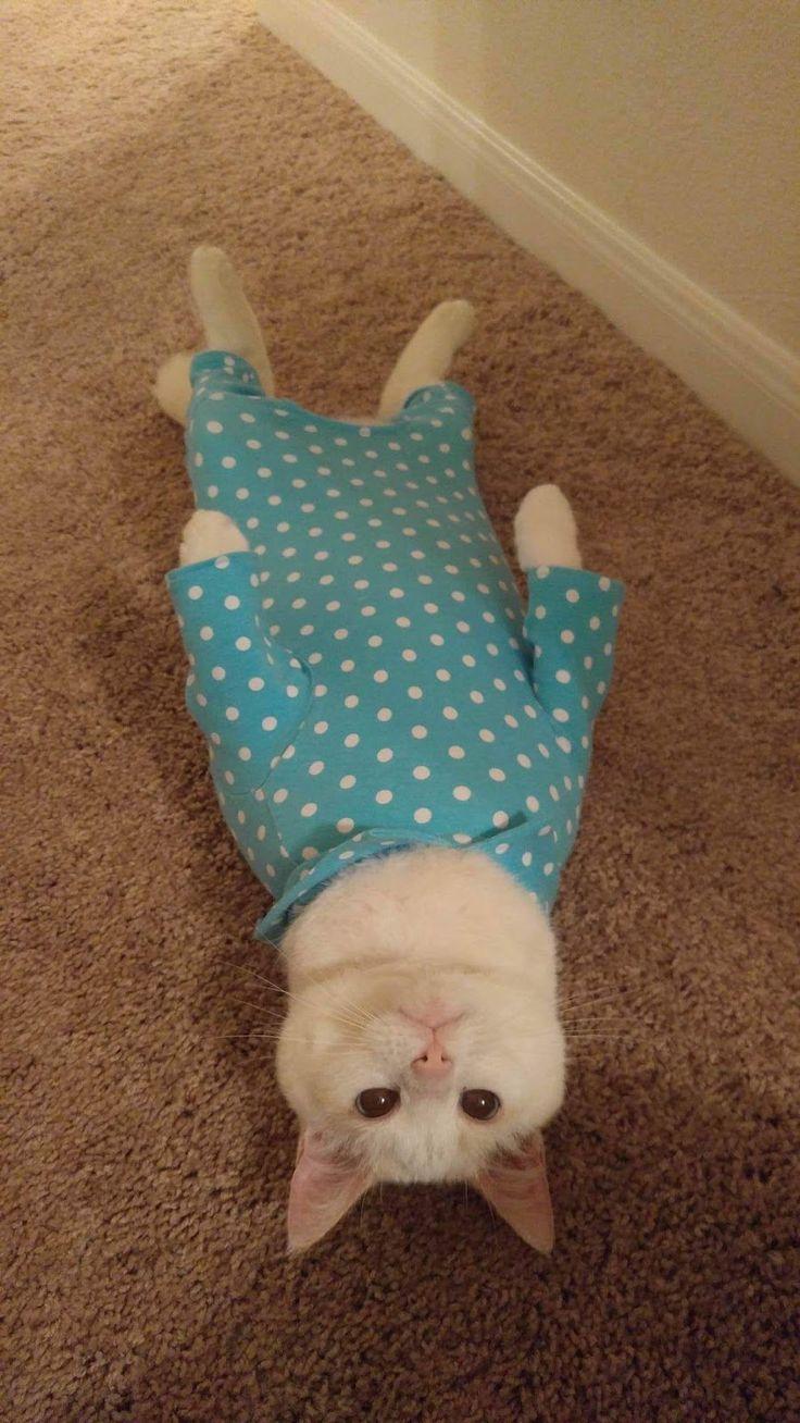 Soooooooooooooooooooo cute!!!!!! My cat would love this!!!