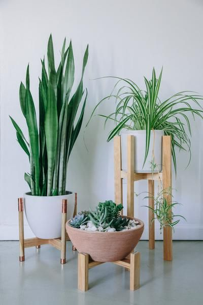 25 best ideas about indoor plant stands on pinterest for Wooden plant pot ideas