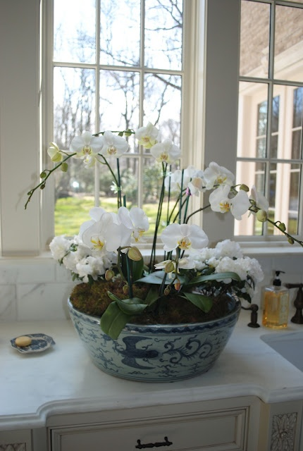 Beautiful white orchids in blue/white planter - so elegant... Exactly what I want