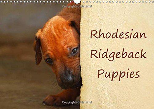 Rhodesian Ridgeback Puppies (Wall Calendar 2016 DIN A3 Landscape): A monthly calendar with photographs of Rhodesian Ridgeback puppies. (Monthly calendar, 14 pages) (Calvendo Animals) von Anke van Wyk http://www.amazon.de/dp/1325053651/ref=cm_sw_r_pi_dp_fqU9ub0GP7EF5