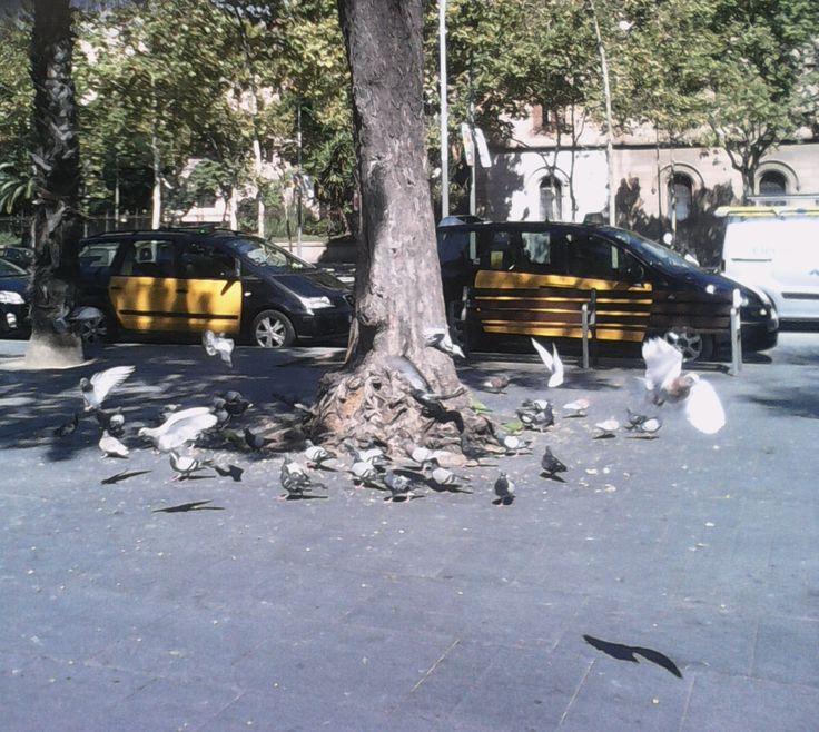 Plaça Universitat, palomas