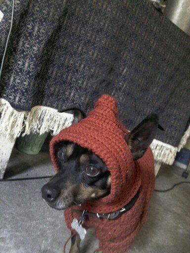 Gorrito perro crochet