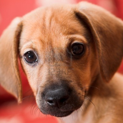 #Mutt #Dogs #Puppy