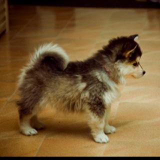 My dream Puppy!