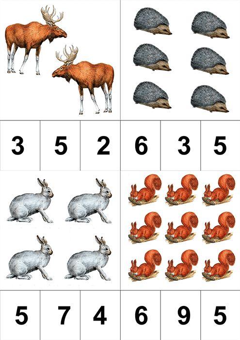 математика картинки животных нас