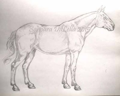 After the pencil drawing, I will start to ink it in before I can put it on a screen. Sparrow Avenue #originalpencildrawing #horsepencildrawing #handdrawn #horsesketch