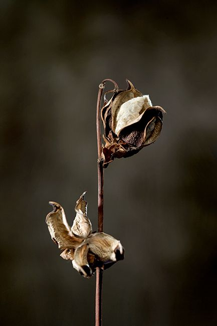flowers impressions photo by Óscar Almeida