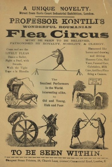 Right next to the Flea Market!!  Lice and nits get in 1/2 price this weekend only!!