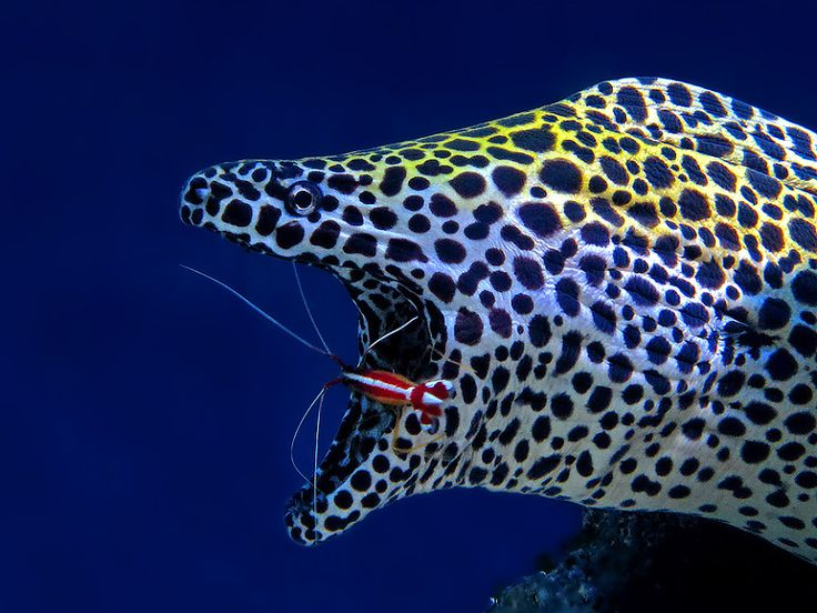 137 Best Eels Images On Pinterest Marine Life Exotic