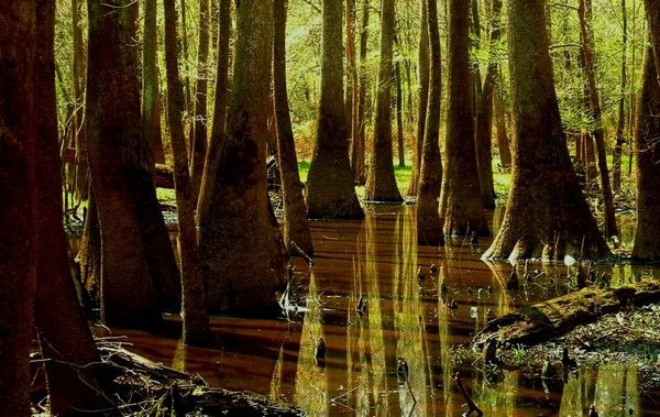 The 58 National Parks in the USA(*13): Congaree National Park | Tourism On The Edge