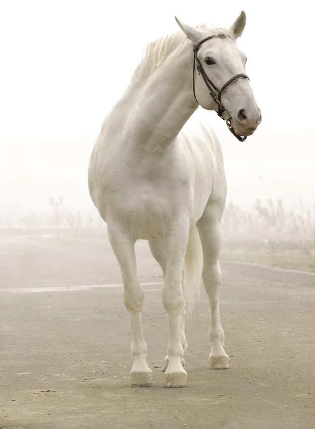 source: equestrian.ru    >Unfortunately I don't read Russian; so I don't know what breed or where this gorgeous animal comes from.<  Помнится мультик из детства....
