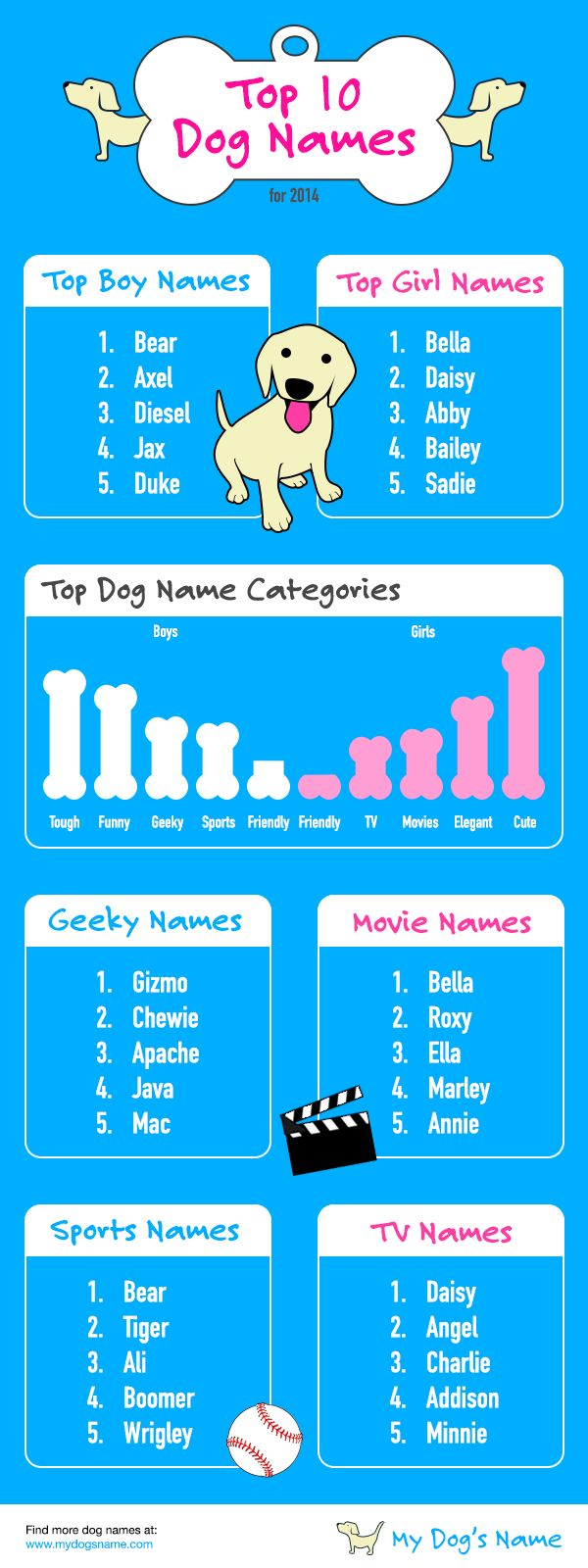 Top 10 dog names infographic