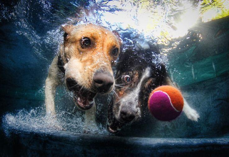 photo of underwater dogs