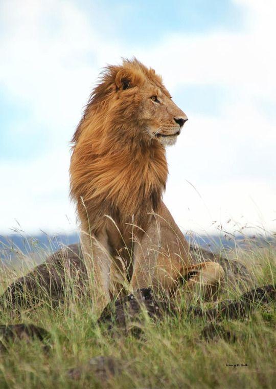 His Majesty by Nancy D Hall
