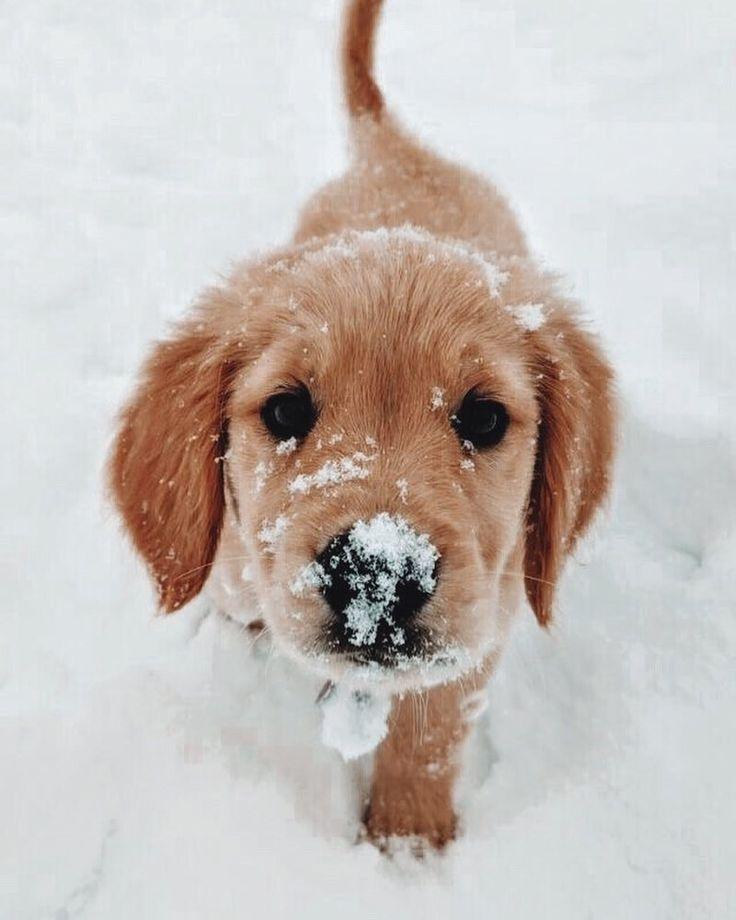 Animals Puppy Snow Winter Animal Sweet Cute Dog Pet