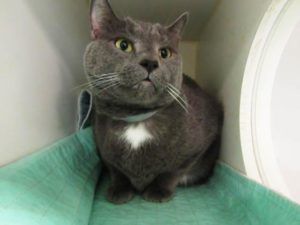 ***STILL ALIVE 10/14/16*** FIV POSITIVE MAX WAS DUMPED BECAUSE OF HIS HEALTH! WHAT KIND OF A HUMAN BEING CAN ONE BE TO DO THAT?? AND...AT A HIGH KILL SHELTER!!! It's like MAX'S FORMER FAMILY wants him to die! MAX is 9 and NEUTERED and by the way this