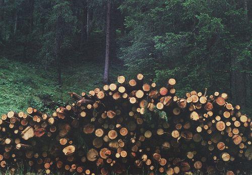 logsAdventure, Life, Nature, Logs, Beautiful, Trees, Forests Woodland Cabin, Firewood, Wanderlust