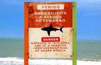 Taís Paranhos: Pesquisa para prevenir ataques de tubarão