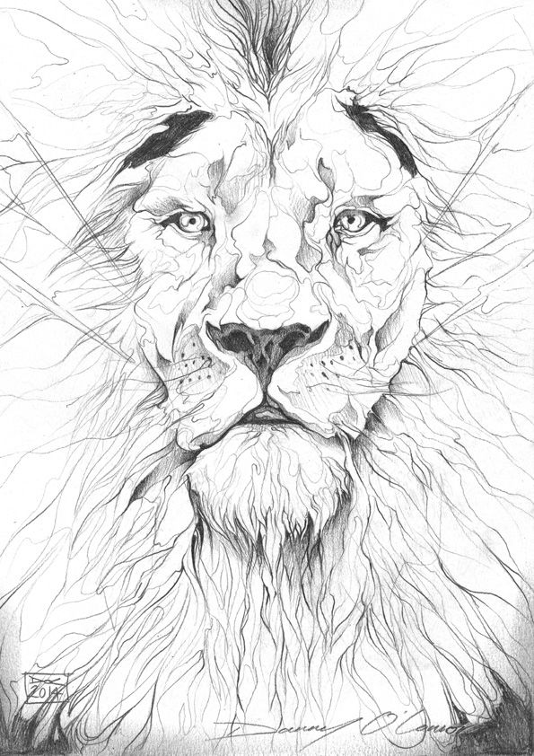 Lion Pencil Drawing by ART-BY-DOC.deviantart.com on @deviantART