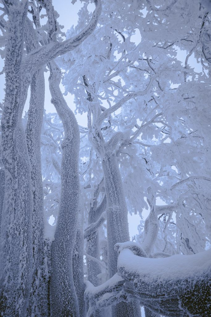 ✯ Grove in Snow