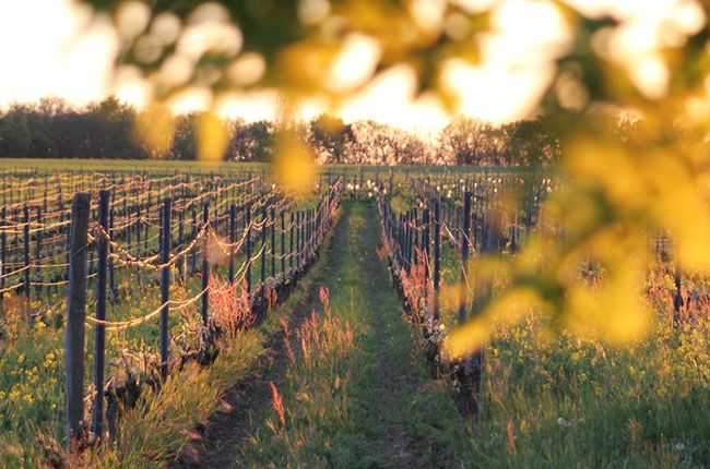 Toulouse wine tour: Explore nearby wineries in Gaillac
