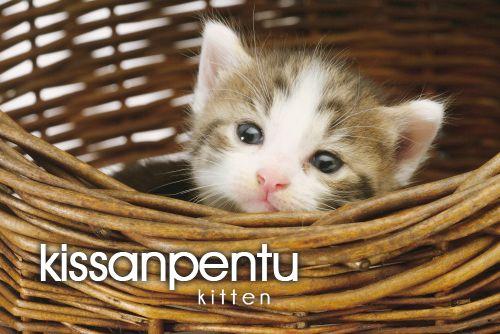 kissanpentu ~ kitten