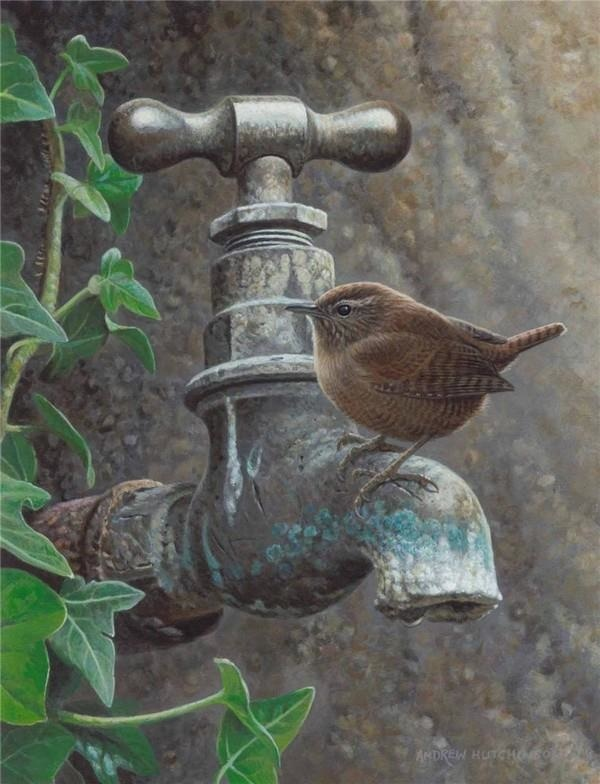 Jenny Wren On Garden Tap With Climbing Ivy