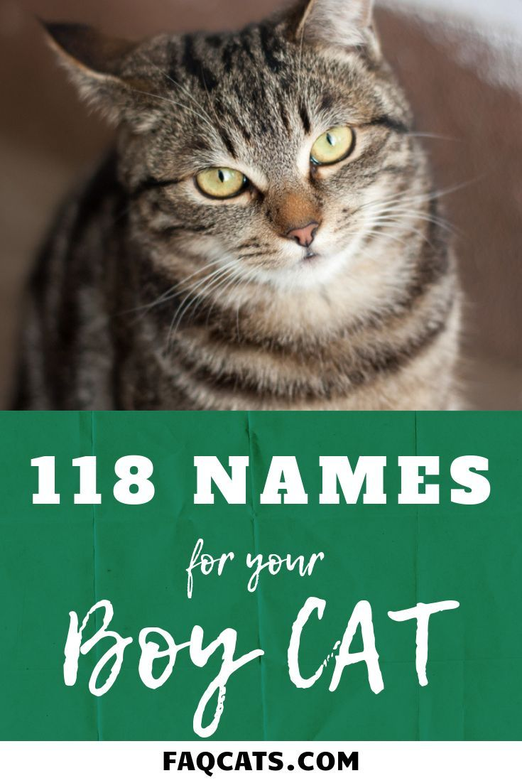 118 Male Tabby Cat Names With Images Tabby Cat Names Tabby Cat Cat Names