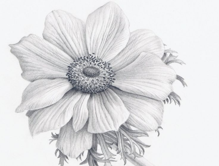 Realistic Flower Drawing - See more about Realistic Flower Drawing, drawing a realistic flower, easy realistic flower drawing, realistic drawing of flower, realistic flower drawing, realistic flower drawing step by step, realistic flower drawing tutorial, realistic flower drawings in pencil, realistic flower drawings step by step, realistic lotus flower drawing