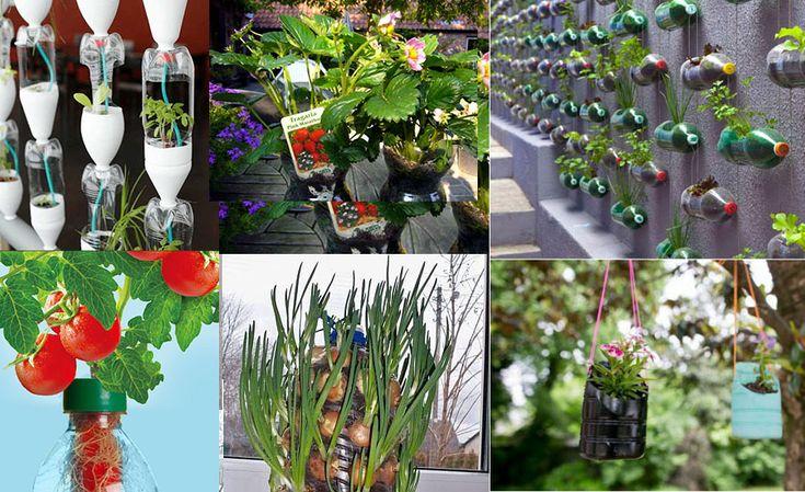 Cum poți crește legume în PET-uri. Află detalii despre cultivarea legumelor suspendate cu capul în jos, despre suportul de căpsuni din PETuri.