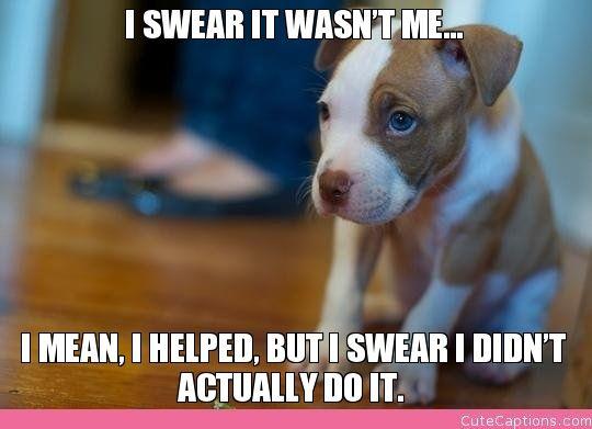 Funny Memes For Kids No Swearing : I swear it wasn t me… mean helped but