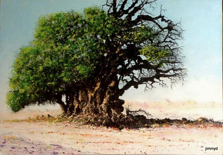 Baobab tree - oil on canvas -60cm x 42cm - jimmy deacon