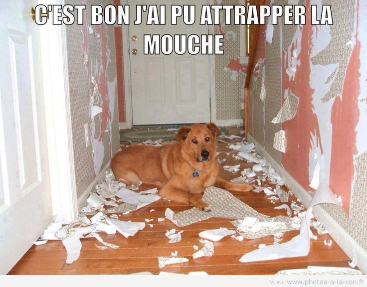 This makes me laugh harder thinking this destruction came from a french speaking dog. Lol