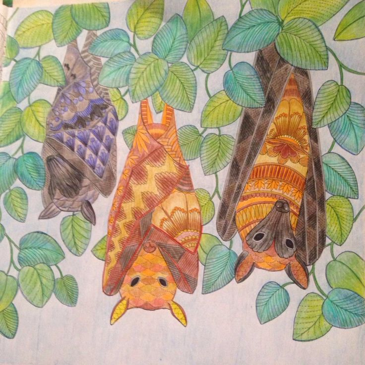 Tropical Wonderland Bats Millie Marotta