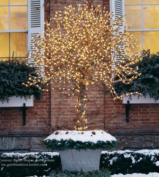 Christmas Tree Decorations Facebook: 665 Best Images About Christmas TREE Ideas On Pinterest