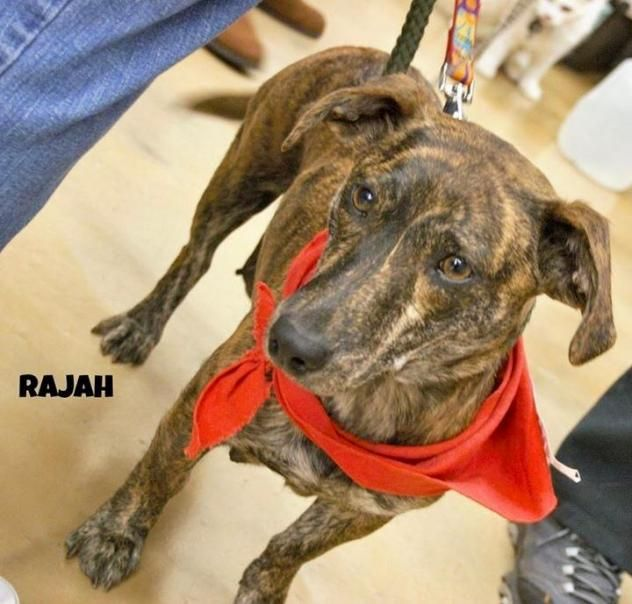 """RAJAH """"loves children, 25 lbs, happy & outgoing"""""""