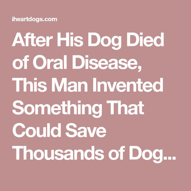 After His Dog Died of Oral Disease, This Man Invented Something That Could Save Thousands of Dogs' Lives – iHeartDogs.com