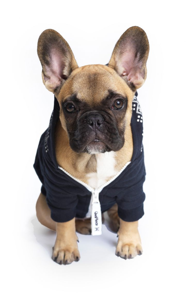 french bulldog onesie best 25 french bulldog clothes ideas on pinterest 5194