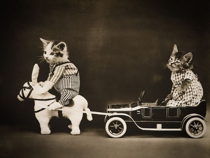 The Breakdown with Cats, photographed by Harry Whittier Frees, June 24, 1914. Photograph shows two kittens wearing clothes with a toy horse or mule pulling a broken down toy car.