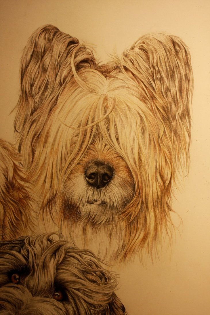 42 best Briard images on Pinterest | Animals, Brie and Big ...
