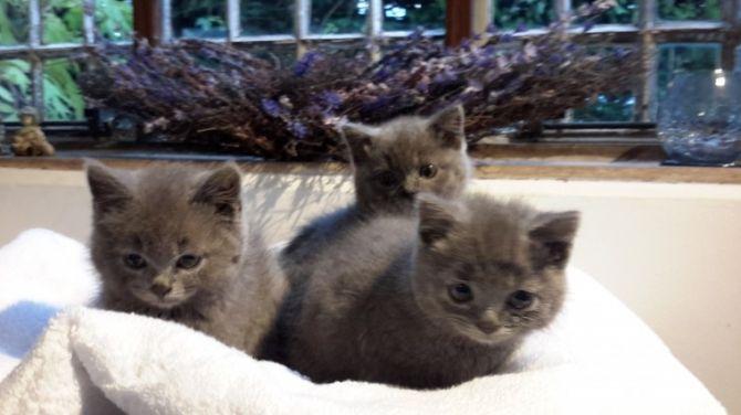 Cute Teacup Persian Kittens In 2020 Teacup Persian Kittens Persian Kittens Persian Kittens For Sale