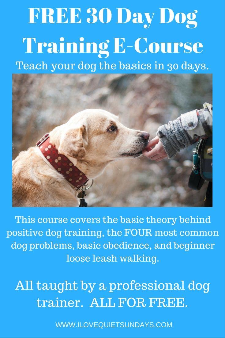 Free 30 Day Dog Training E Course All The Basics Of Dog Training