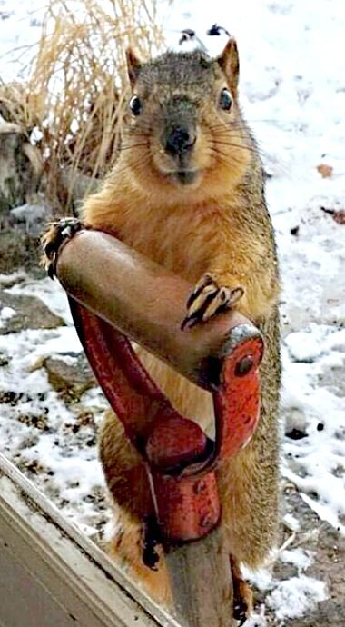 May I borrow this shovel? I have some holes to dig...  (photo credit unknown)