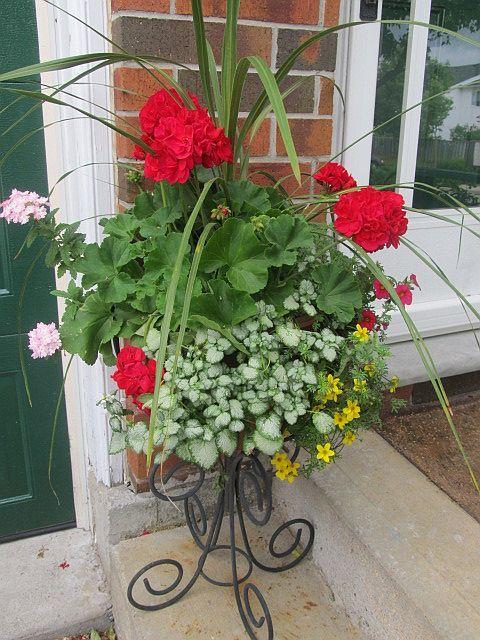 31 best front door flower pots images on pinterest front for Front door garden ideas