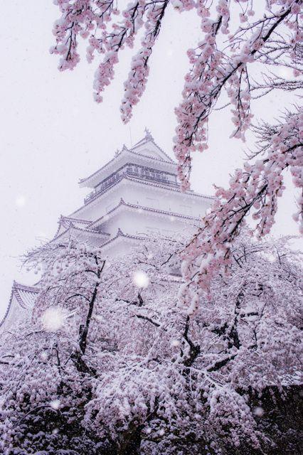 Neige sur l'arbre de la cerise, Aizu-Wakamatsu Château (Château Tsuruga), Aizuwakamatsu, Fukushima, Japon